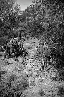 Photograph - Black And White Desert Path by Aimee L Maher Photography and Art Visit ALMGallerydotcom