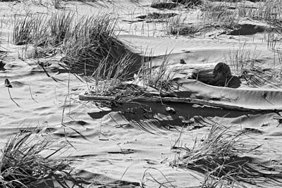 Photograph - Black And White Driftwood And Beach Grass Popham Beach Maine by Keith Webber Jr