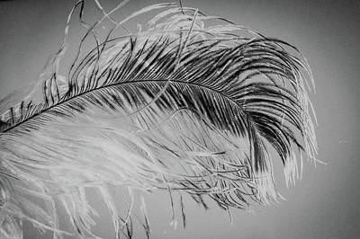 Beauty Photograph - Black And White Feather Art by Wall Art Prints