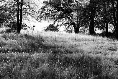 Photograph - Black And White Field With Trees by Serena King
