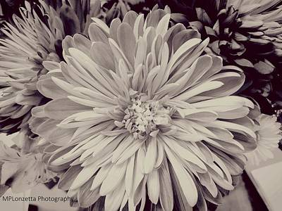 Photograph - Black And White Flora by Marian Palucci-Lonzetta