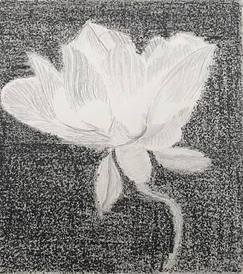 Magnolia Flower Drawing - Black And White Flora by Sammy D