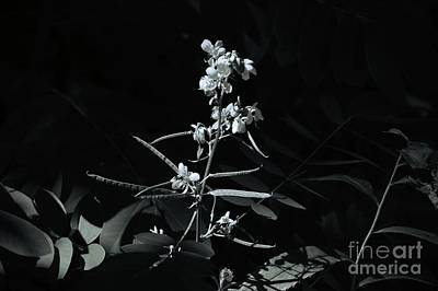 Photograph - Black And White Floral Nature Art by Robyn King