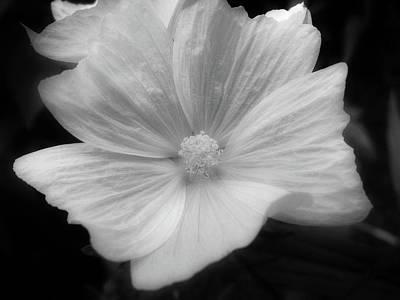 Black And White Floral Art Print by Rhonda Barrett