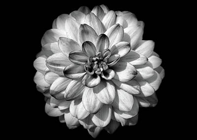 Photograph - Black And White Flower 2 by Lilia D