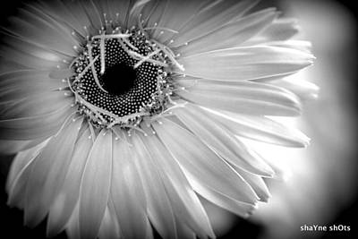 Photograph - Black And White Flower 2 by Shayne Johnson Fleming