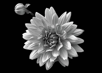 Photograph - Black And White Flower 3 by Lilia D