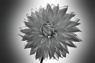 Photograph - Black And White Flower 4 by Lilia D