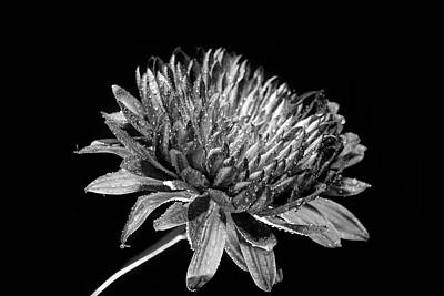 Photograph - Black And White Flower 5 by Lilia D