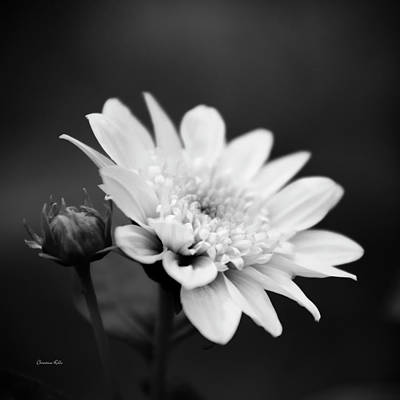 Photograph - Black And White Flower by Christina Rollo