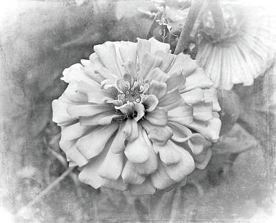 Photograph - Black And White Flower by Judi Saunders