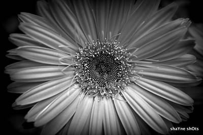 Photograph - Black And White Flower by Shayne Johnson Fleming