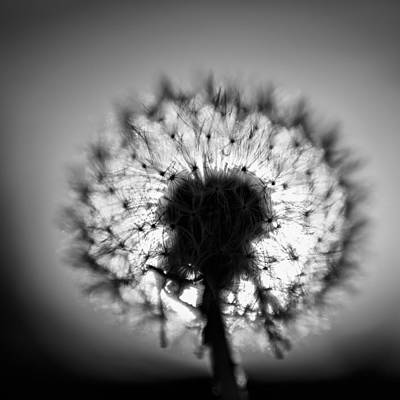 Art Print featuring the photograph Black And White Flower Ten by Kevin Blackburn
