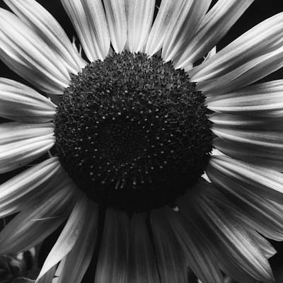 Art Print featuring the photograph Black And White Flower Twelve by Kevin Blackburn