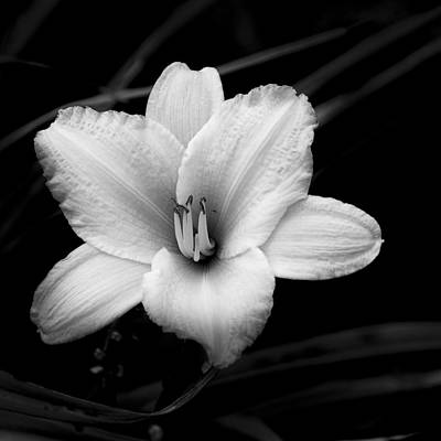 Art Print featuring the photograph Black And White Flower Twenty by Kevin Blackburn