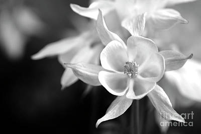 Photograph - Black And White Flowers #2/2 by Gerhard Hoogterp