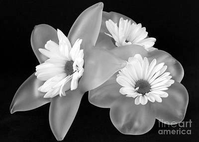 Photograph - Black And White Flowers In Holders by Barbie Corbett-Newmin