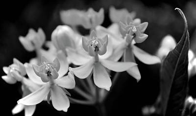 Photograph - Black And White Flowers by Lynda Anne Williams