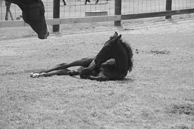 Photograph - Black And White Foal 2 by Max Mullins