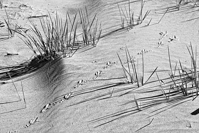 Photograph - Black And White Footprints And Beach Grass Popham Beach Maine by Keith Webber Jr