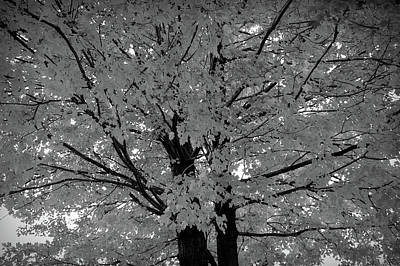 Photograph - Black And White Golden Tree by Aimee L Maher Photography and Art Visit ALMGallerydotcom