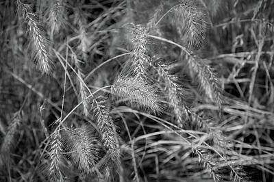 Photograph - Black And White Golden Wheat by Aimee L Maher Photography and Art Visit ALMGallerydotcom