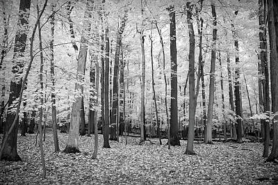 Photograph - Black And White Golden Woods by Aimee L Maher Photography and Art Visit ALMGallerydotcom
