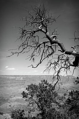 Photograph - Black And White Grand Canyon 3 by Aimee L Maher Photography and Art Visit ALMGallerydotcom