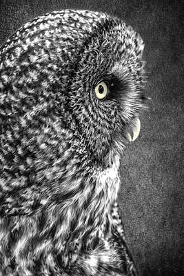 Photograph - Black And White Great Grey by Wes and Dotty Weber