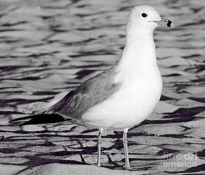 Custom Ring Photograph - Black And White Gull by D Hackett