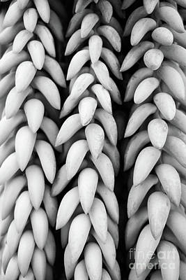 Photograph - Black And White Hanging Plant Detail. by Cesar Padilla