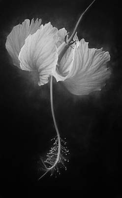 Wall Art - Photograph - Black And White Hibiscus by Martin Belan