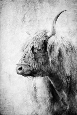 Photograph - Black And White Highlander Cow by Athena Mckinzie