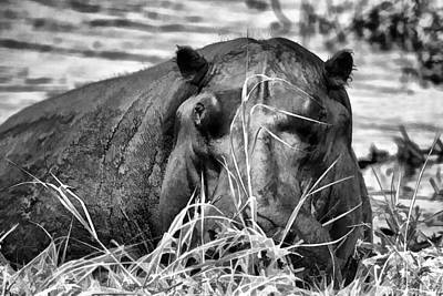 Photograph - Black And White Hippo Simplified by Kay Brewer