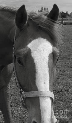 Photograph - Black And White Horse 2 by Donna L Munro