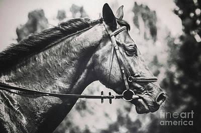 Photograph - Black And White Horse Art Portrait by Dimitar Hristov