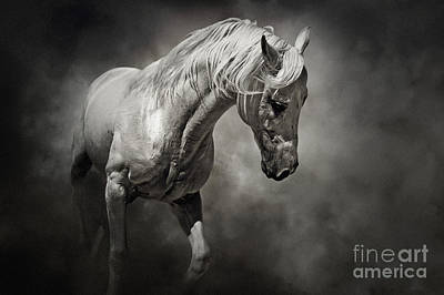 Photograph - Black And White Horse - Equestrian Art Poster by Dimitar Hristov
