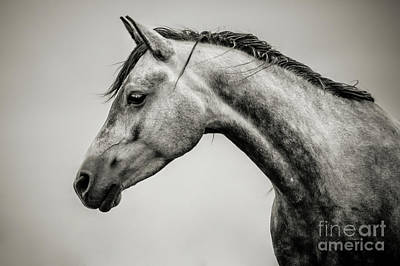 Photograph - Black And White Horse Head by Dimitar Hristov