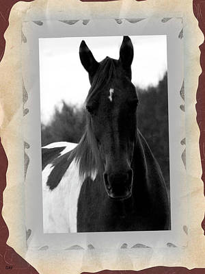 Black And White Horse Portrait Print by Debra     Vatalaro