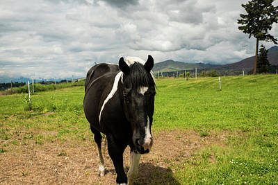 Photograph - Black And White Horse Under Gray Clouds by Tom Cochran