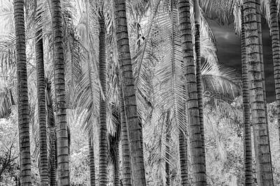 Photograph - Black And White Infrared Palm Trees At The Huntington Library by Randall Nyhof