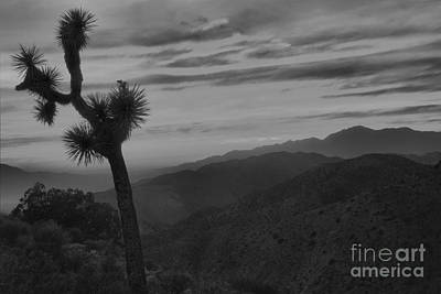 Photograph - Black And White Joshua Tree Keys View Sunset by Adam Jewell