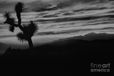 Photograph - Black And White Joshua Tree Sunset by Adam Jewell