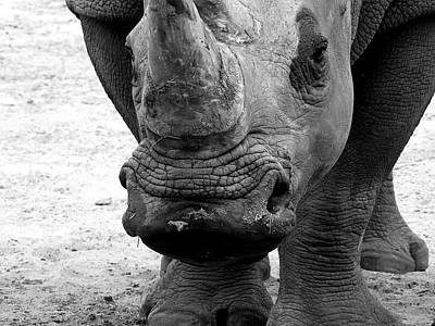 Photograph -  Black And White Kiss A Rhino  by Chris Mercer