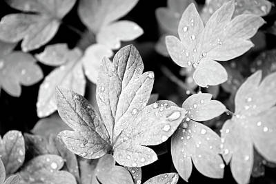 Photograph - Black And White Leaves by Christina Rollo
