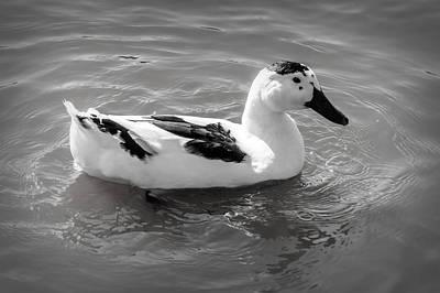 Photograph - Black And White by Leticia Latocki