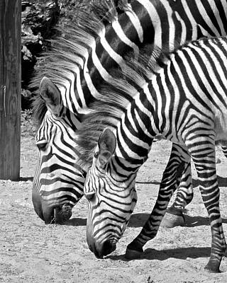 Photograph - Black And White Like Mother Like Daughter by Carol Bradley