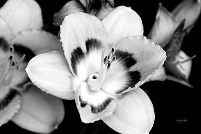 Photograph - Black And White Lily by Christina Rollo