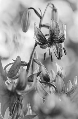 Lily Photograph - Black And White Lily by Lise-Lotte Larsson