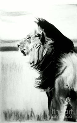 Pastel - Black And White Lion by Bonnie Cushman